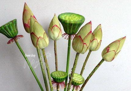 Bộ sưu tập hoa sen đẹp