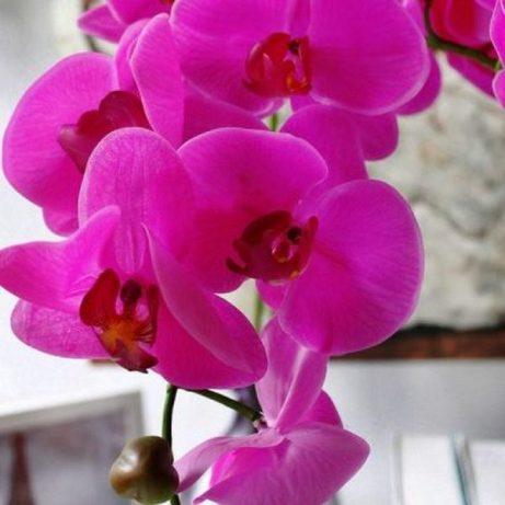 Cành lan màu tím