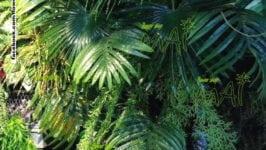 Phong cách nhiệt đới (Tropical style)